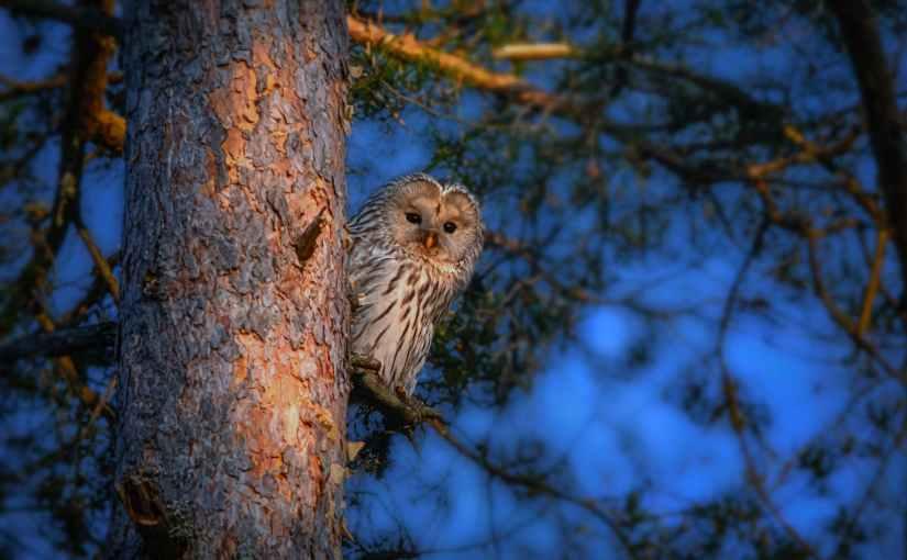 The Night OwlWriter