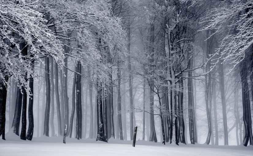 A Half WinterSonnet